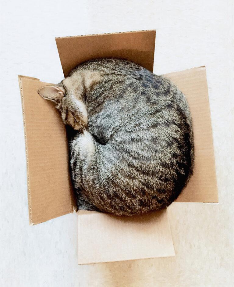 Produkte_Verpackungen